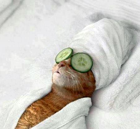 Cat in spa